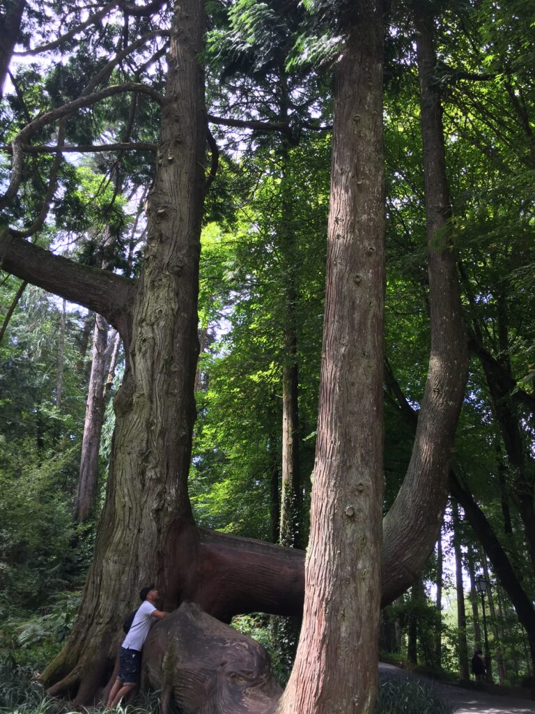 gigante nel giardino da fiaba